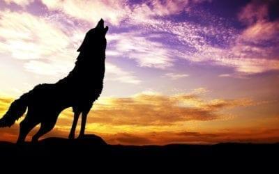 Älä ole etätyön yksinäinen susi – pidä nämä vinkit mielessä!